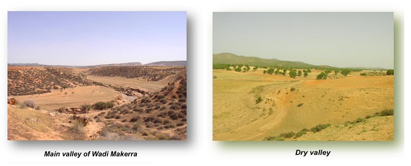 Algerie_field_photos_1